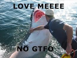 shark - LOVE ME